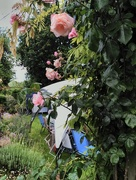 25th Jun 2016 - Garden Party Respite from the Storms