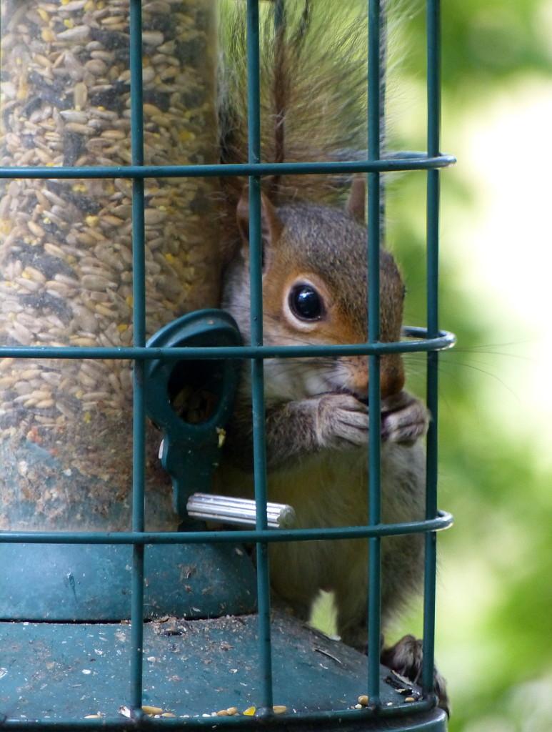 Squirrel proof by judithdeacon