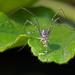 Spider by dianen