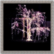 9th Dec 2010 - Cascading Lights