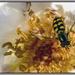 Macro wasp by pcoulson