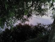 27th Jun 2016 - Weeping willow weflection