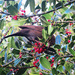 holly berry feast