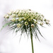 Portrait of a weed by berelaxed