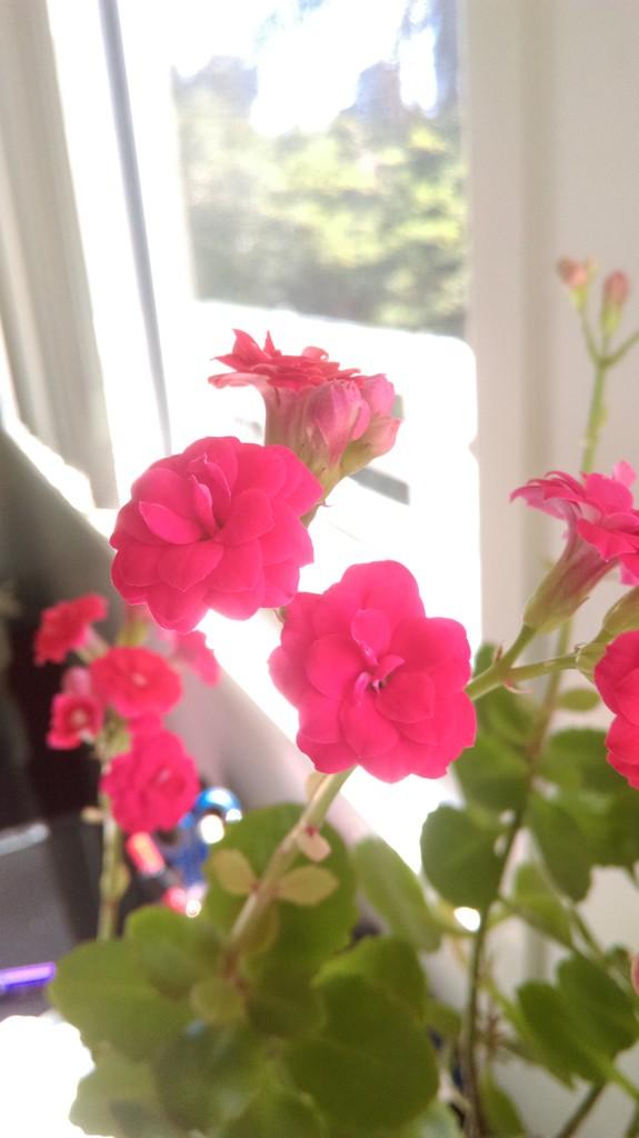 Pretty In Pink by mozette