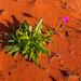 Desert Flower by pusspup