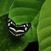 Butterfly by jaybutterfield