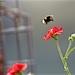 Bee landing by padlock