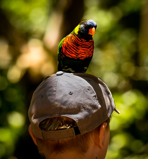 Hat Ornament by stray_shooter