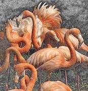 20th Jun 2016 - Fancy Flamingos