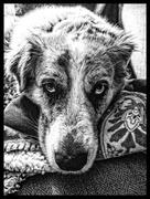 30th Jun 2016 - I love my dog