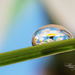 Daisy Droplet by lynne5477