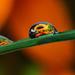 Flower Droplets by lynne5477