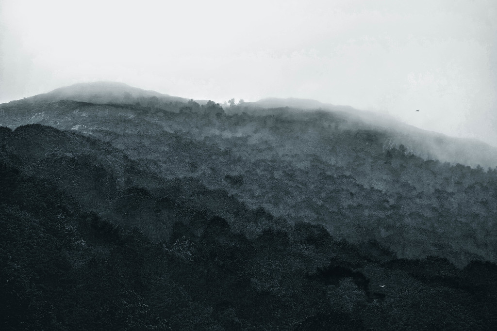 Mist coming in by overalvandaan