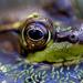 Look into my eye! by fayefaye