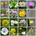 Wild Flowers at Wicken Fen by susiemc