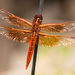 Like a Dragonfly on a Wire.... by stefneyhart