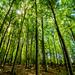 Bøkeskogen ( beech forest ) by elisasaeter