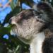 euc-bliss by koalagardens