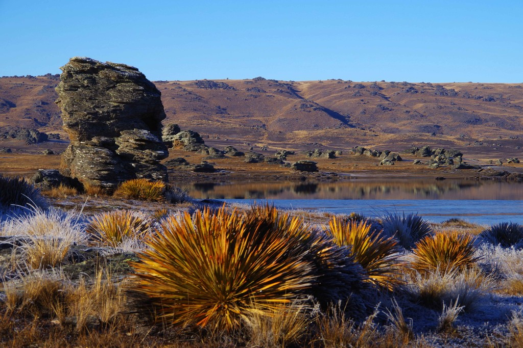 Frost on the ground, Poolburn Dam Central Otago, NZ by maureenpp