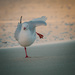 One legged seagull pose by jodies