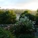 Evening light by shirleybankfarm