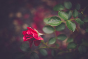 7th Jul 2016 - No Time = More Flowers