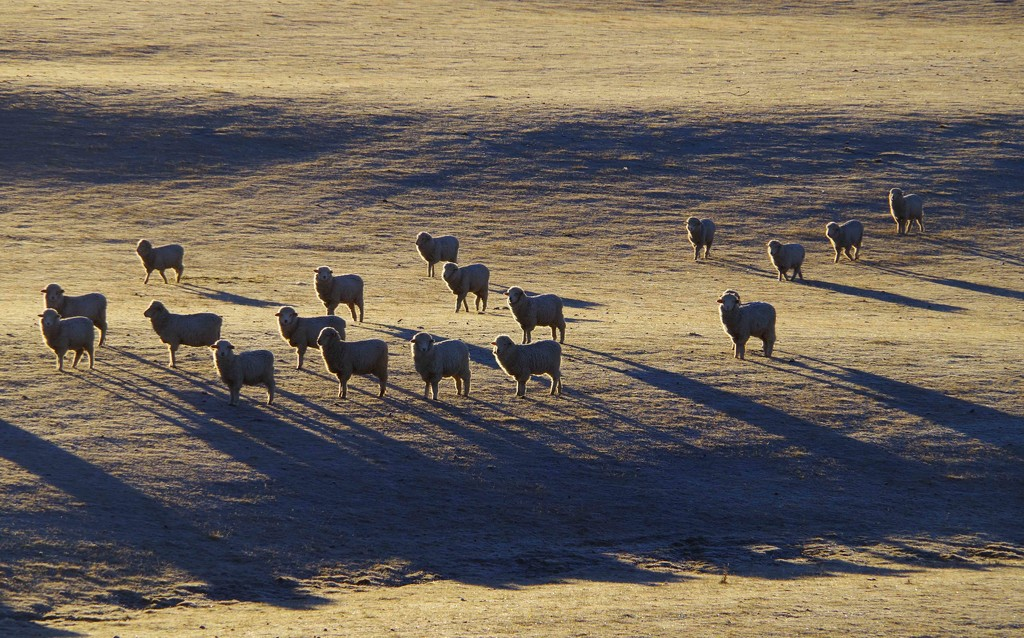 Frosty morning waiting for the farmer by maureenpp