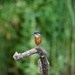 Kingfisher. by padlock