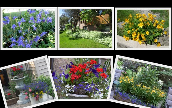 Flowers around the house by bruni