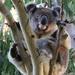 treetops by koalagardens