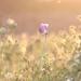 Daybreak by shepherdmanswife