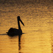 On Golden Pond by onewing