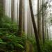 Forest Fog by jgpittenger