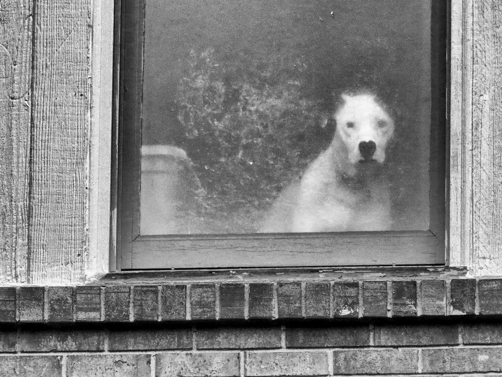 How Much Is That Doggie... by grammyn
