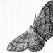 B&W Moth by rjb71