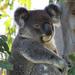wasn't me by koalagardens