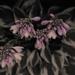 hosta flowers by jackies365
