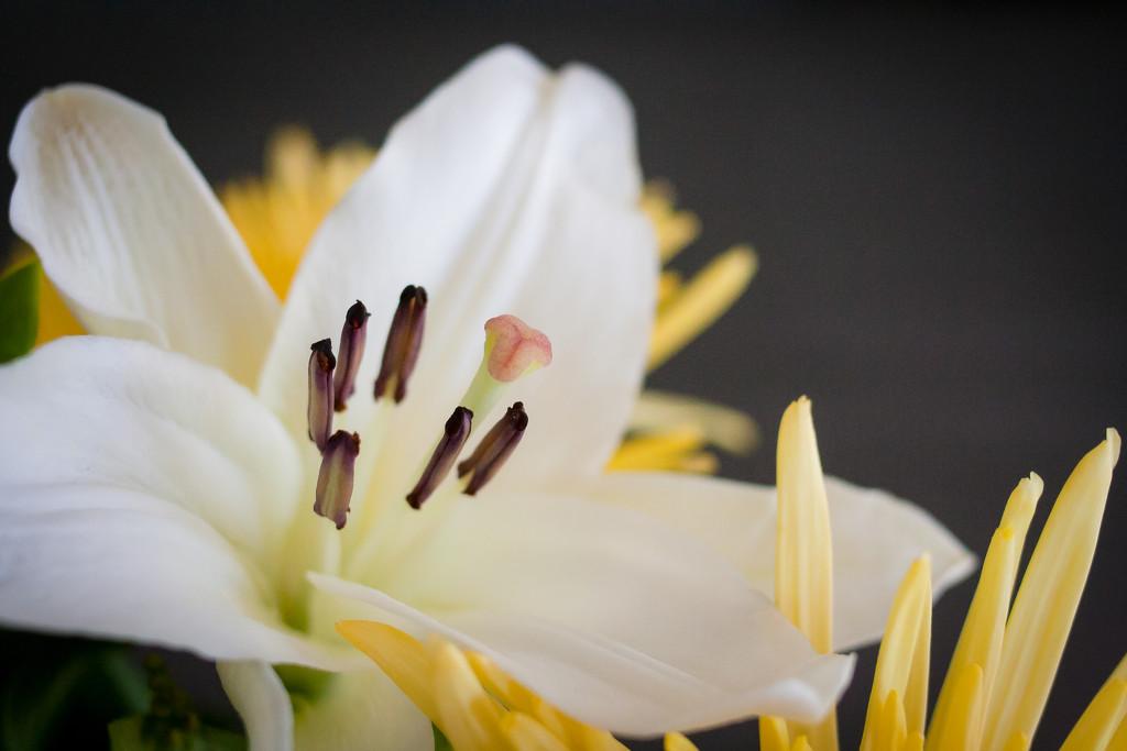 Summer Bouquet by tina_mac