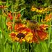 Flowers by tonygig