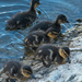 Sweet little ones by dridsdale