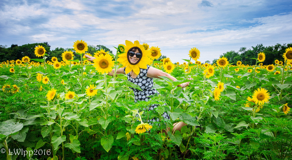 Rockin With The Sunflowers  by lesip