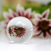 2016 07 17 - Glass Flowers by pixiemac