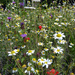Wildflower Garden by cmp