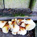 Fungus by the garden shed