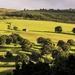 Golden hills by shepherdman