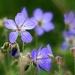 Wild Flowers by shepherdmanswife
