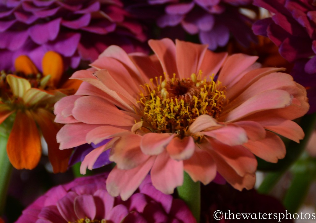Flowers from my son's garden 1 by thewatersphotos