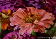 20th Jul 2016 - Flowers from my son's garden 1