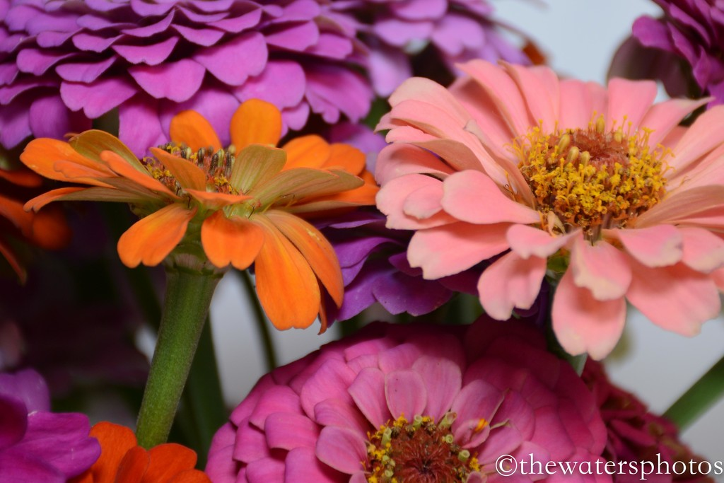 Flowers from my son's garden 2 by thewatersphotos